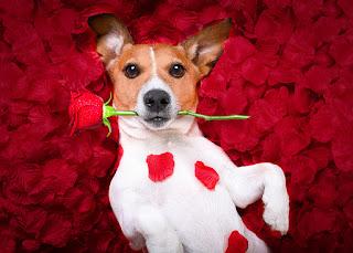 hayvan sevgisini abartmak ile ilgili aramalar hayvanlara aşırı düşkünlük hastalığı  hayvan sevgisi ekşi  psikolojide hayvan sevgisi  hayvan bağımlılığı sendromu Akıl Defterim Hayvan Sevgisinin Psikolojimize Etkisi