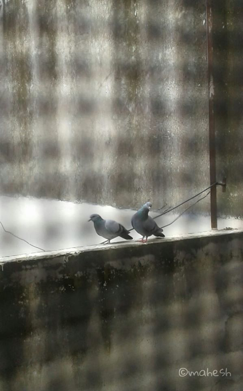 "Winning Pic of Contest #77 Theme ""Bird or Birds"" is by Mahesh Sharma"