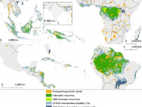 Forests, species on four continents threatened by palm oil expansion