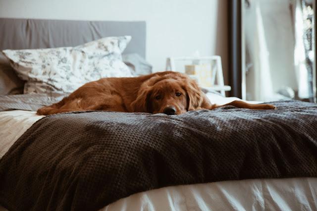 Cómo elegir la cama ideal paso a paso