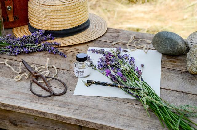 A botanical lesson about lavender