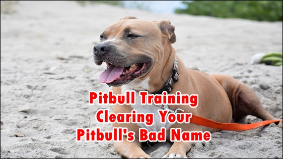 pitbull training,dog training,pitbull,training,pitbull dog training,pitbull muscle training,puppy training,pitbulls,pit bull training,training pitbulls,pitbull training tips,pit bull puppy training,puppy pitbull training,pitbull puppy training,pitbull training videos,poty training for pitbull,pit bull obedience training,pitbull training obedience,pitbull dog training attack,training a blue nose pitbull,pitbull protection training,pitbull aggression training,pitbull training to build muscle