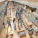 museum in spanish