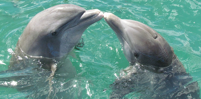 Image: Dolphin Kiss, by Romuald Bézard on Pixabay