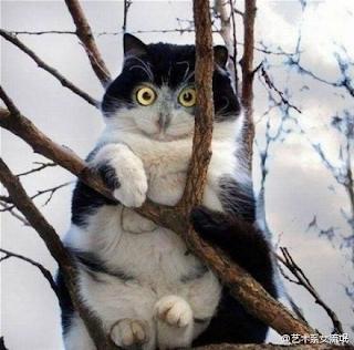 Cat that looks like owl