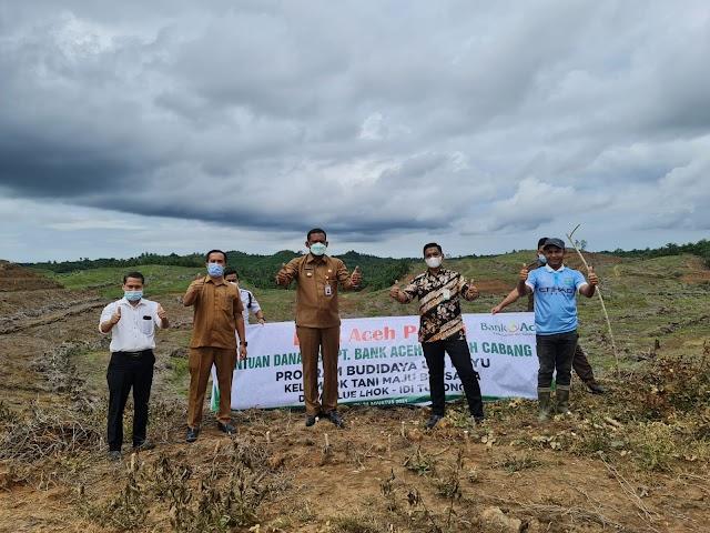 Bank Aceh Syariah Idi Bantu Dana CSR Dalam Program Budidaya Tanam Ubi Kayu