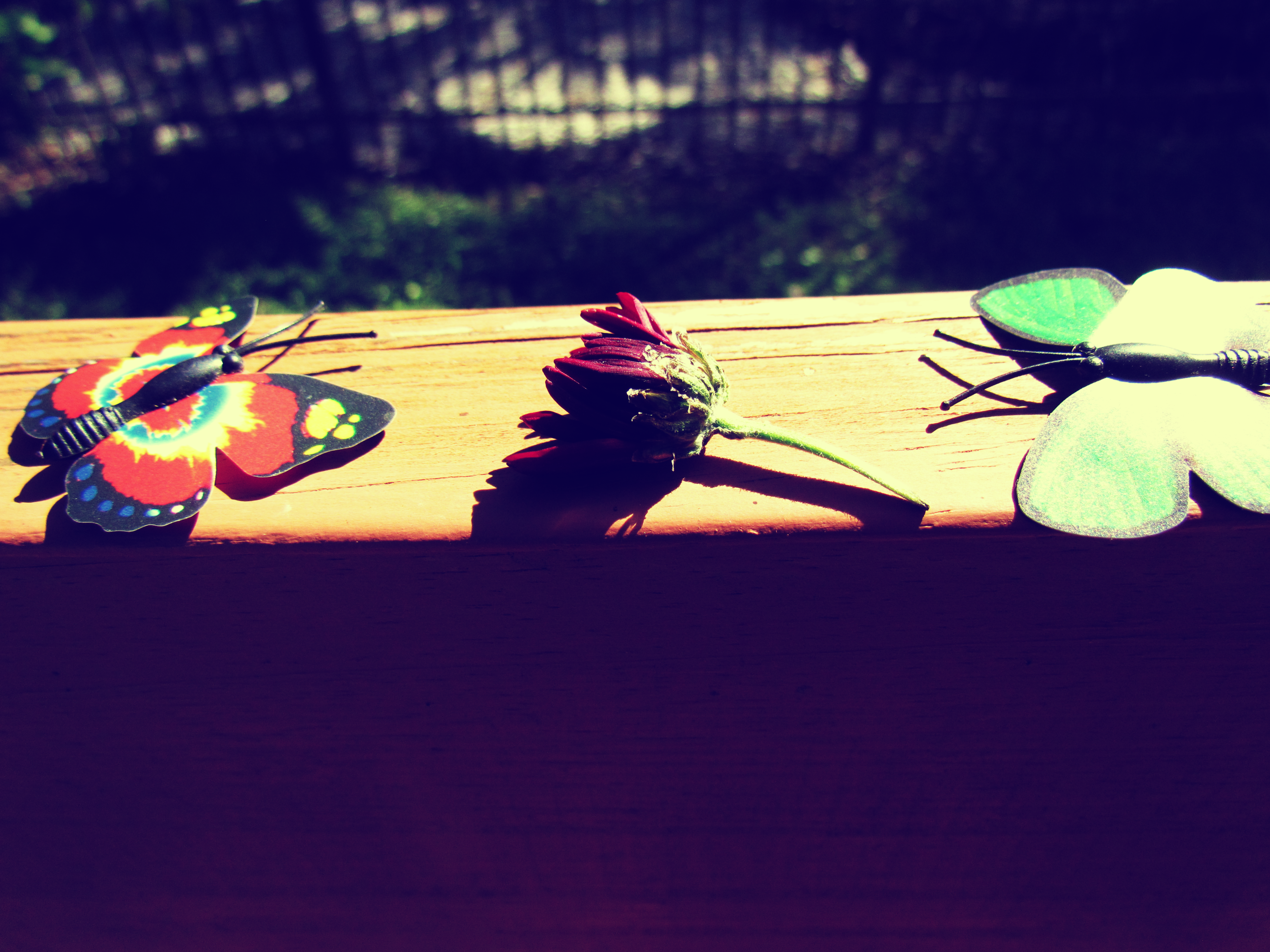 Butterfly magnets and a dried flower bouquet on a wooden deck in the backyard in Florida living