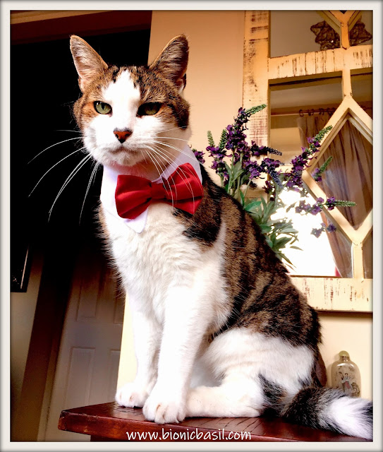 Basil's Epically Epic Bowtie Selfie ©BionicBasil® The Sunday Selfies