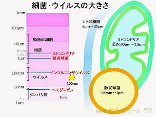 細菌、ウイルスのサイズ 肺炎球菌、ミトコンドリア、人の細胞 ヘモグロビンの大きさ イラストで比較