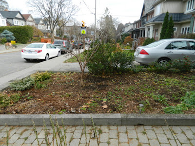Toronto Bedford Park Fall Front Yard Cleanup After by Paul Jung Gardening Services Inc.--a Toronto Organic Gardening Company
