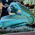 Channa Fish@Snakehead, Ada Yang Harga Sultan, Spesies Mana Pilihan Anda?