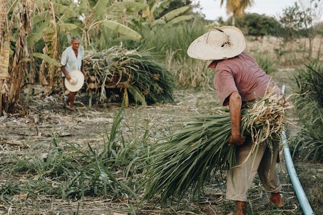 २,५ कोटी शेतकर्यांना Kisan Credit Card मिळेल, ते कसे बनवायचे / कसे मिळवायचे? || Sarkari Yojana