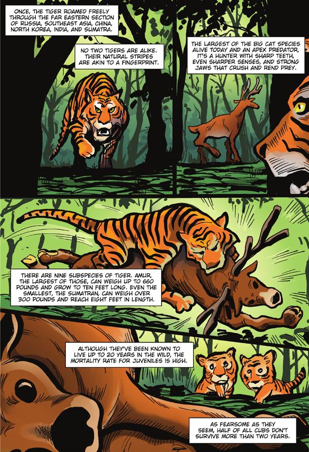 Tiger King 2 - 6