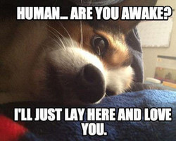 Funny Love Making Memes