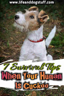 7 Survival Tips When Your Human Is Cuckoo.