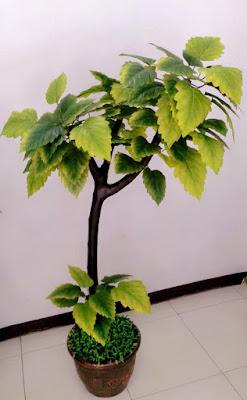 Gambar Pohon Hias Murbai