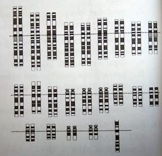 Perhatikan gambar berikut. Berdasarkan peta kromosom ...