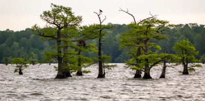 That submerged Ice Age cypress trees near Mobile Bay, Alabama, has been causing a stir for scientists. Creation scientists are also appreciating the findings.