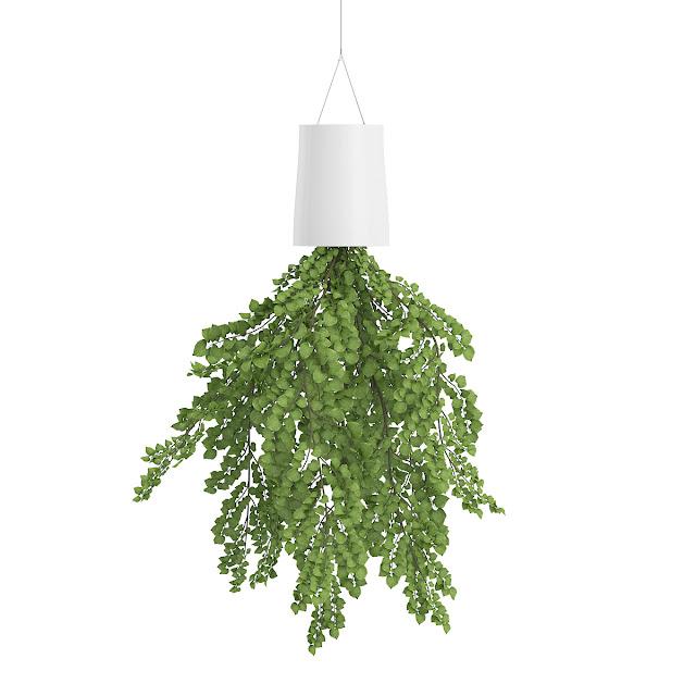 3D model free -  Plants_02