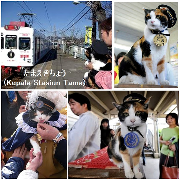 Tama, Ketika Seekor Kucing Jadi Kepala Stasiun
