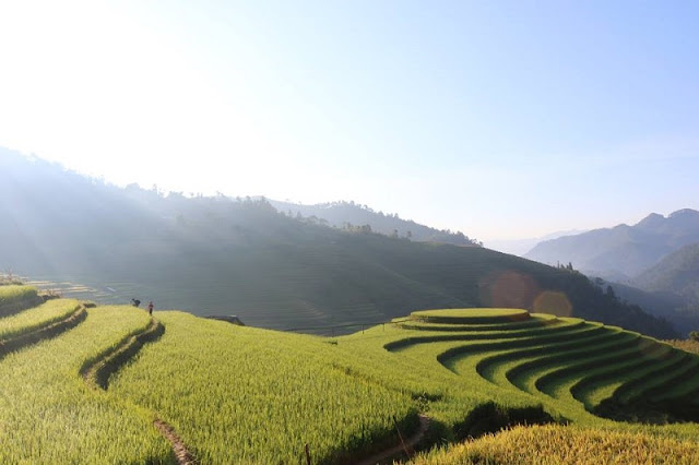 Assorted activities to praising charm of Mu Cang Chai terrace fields