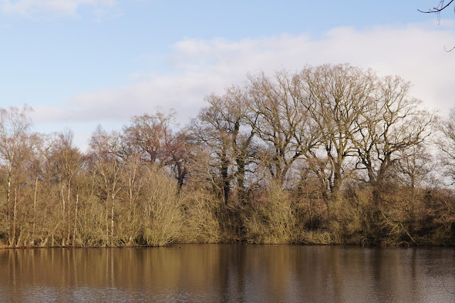 January sights in the Norfolk countryside
