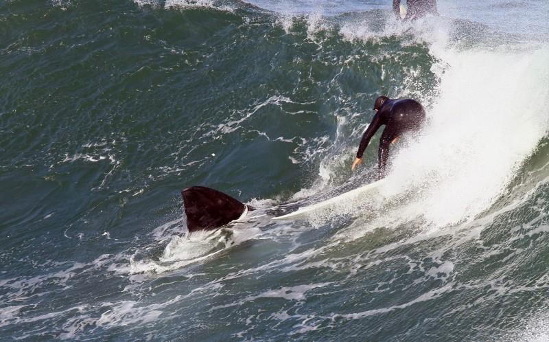 surfista ballena 04