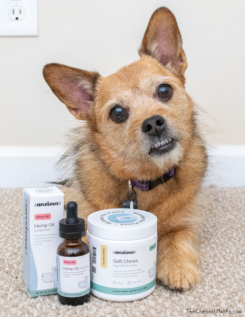 long term anxiety relief for dogs