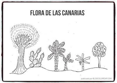flora colorear día de Canarias