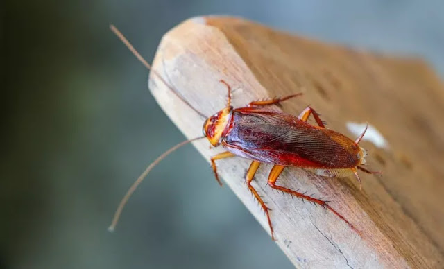 how-to-get-rid-of-cockroaches-in-the-house