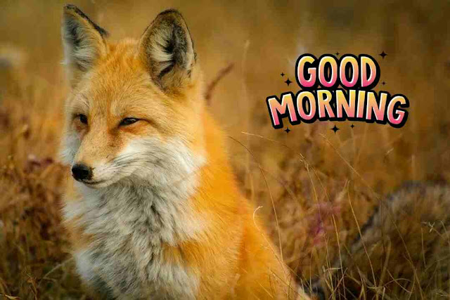 beautiful good morning image of cute dog
