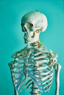 histogeneza kości