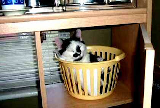 Cat in paper basket