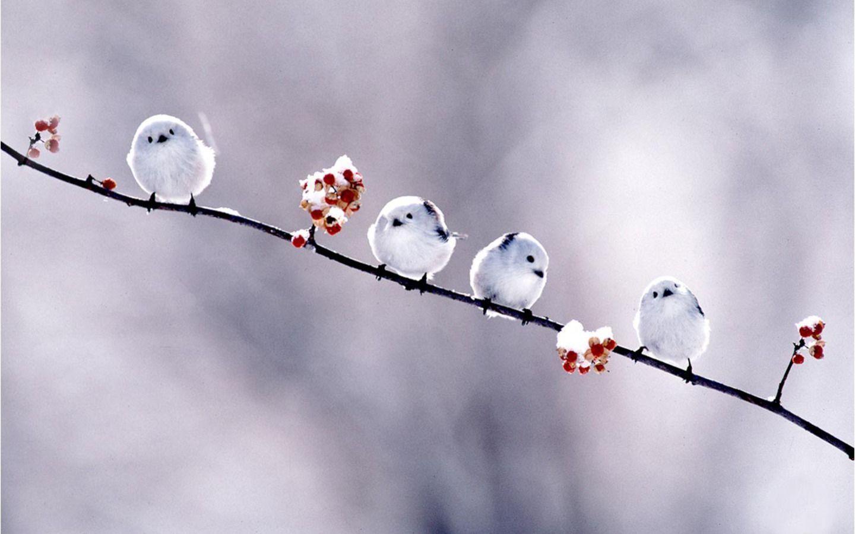 New Bird Wallpapers animals pictures