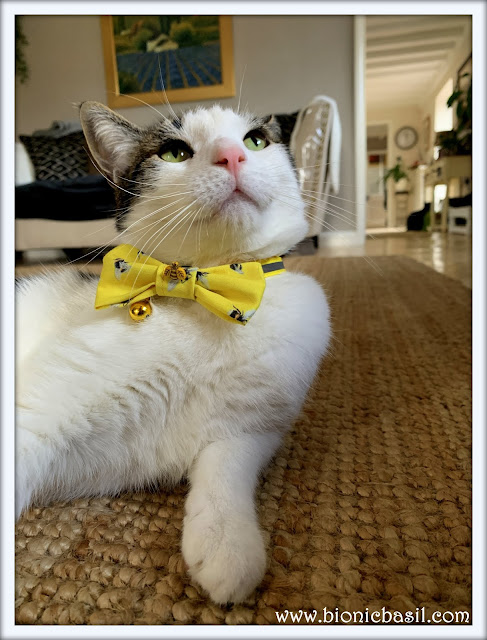 Melvyn's Totally Terrific Bow Tie Selfie  ©BionicBasil® The Sunday Selfies Hop