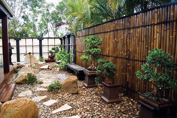 Percantik Rumah Dengan 6 Pilihan Jenis Bambu Hias