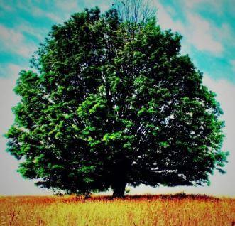 هل تعلم أن عدد الأشجار على الأرض يفوق عدد النجوم الموجودة في مجرة درب التبانة؟