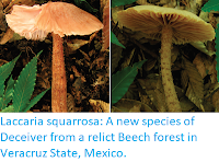 http://sciencythoughts.blogspot.co.uk/2018/01/laccaria-squarrosa-new-species-of.html