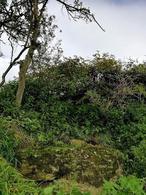 The Wart Stone, Offaly Bullaun Stone.