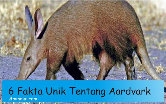 Fakta unik aardvark