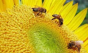 Επιλεγμένες Μελισσοκομικές Συμβουλές #6