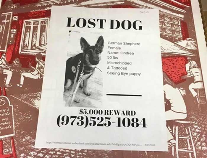 Anjing Hilang New york 2015