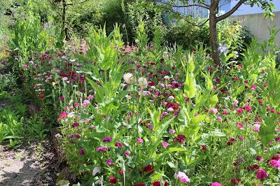 Die Wildblumenwiese