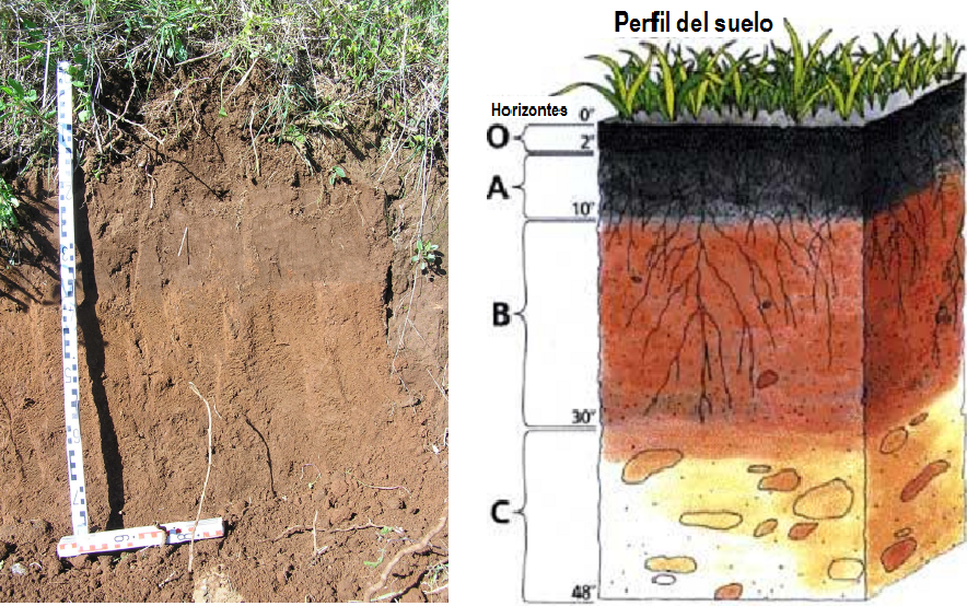 Ccnn 2 eso tipos de suelos for Perfil del suelo wikipedia