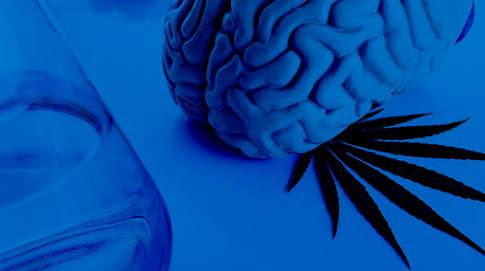 Tratamiento Cognitivo Conductual en Adicciones