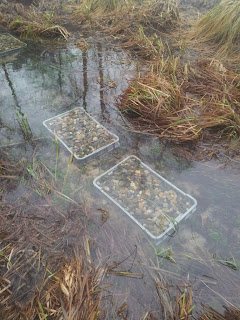 small trouts are being born here