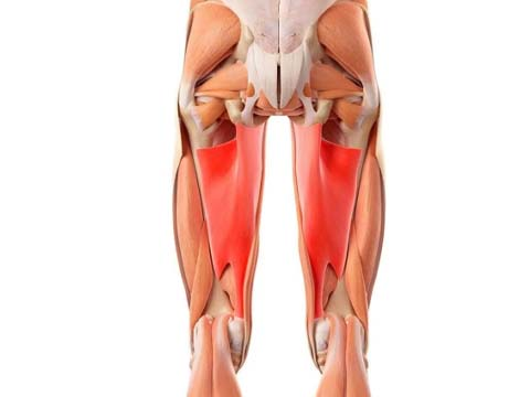 العضلات المستهدفة في سكوات