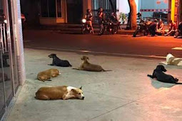 Dogs Wait For Hours Outside Hospital Waiting For Their Homeless Owner To Come Back