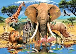 مجموعات رئيسية في مملكة الحيوانات