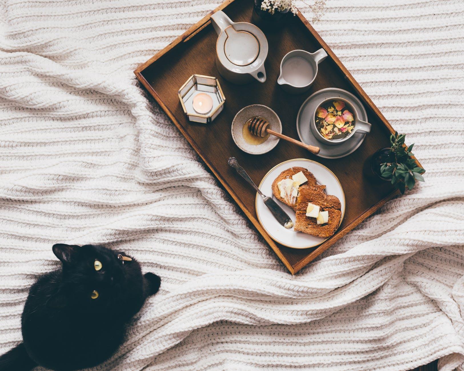 Quand et comment changer la nourriture d'un chat?